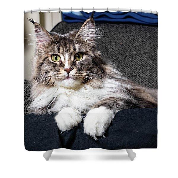 Feline Beauty Shower Curtain