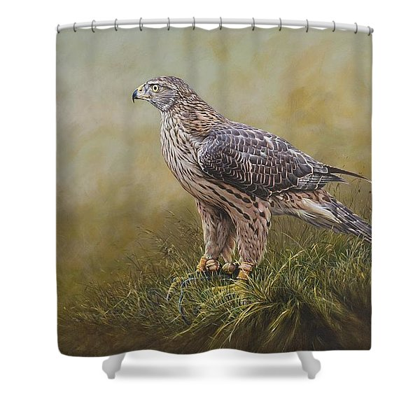 Shower Curtain featuring the painting Female Goshawk Paintings by Alan M Hunt
