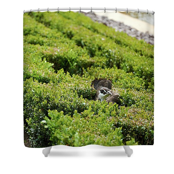 Female Peafowl Among The Bushes In Retiro Park, Madrid, Spain Shower Curtain