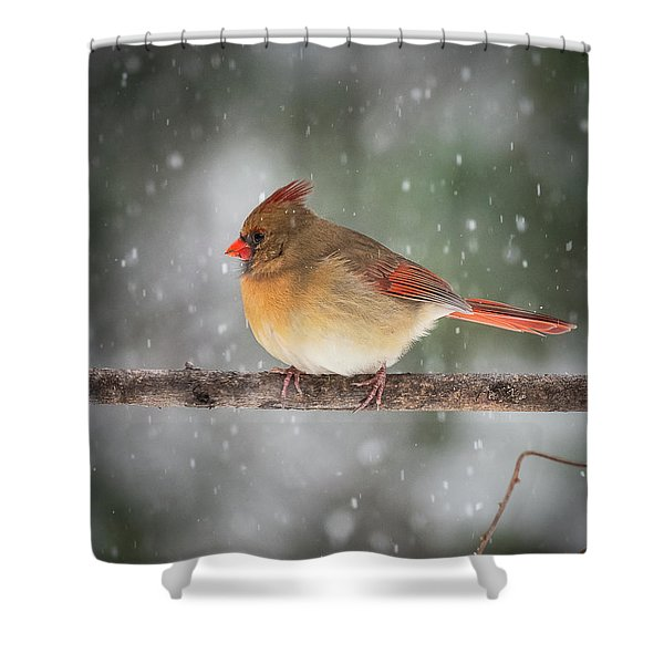 Female Red Cardinal Snowstorm Shower Curtain