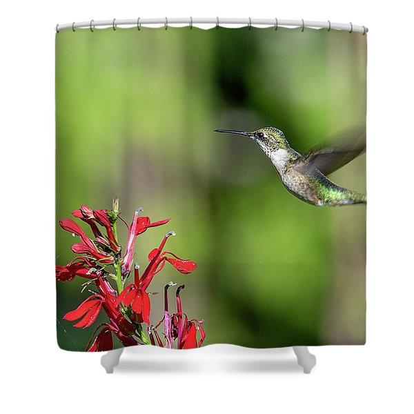 Female Ruby-throated Hummingbird Dsb0320 Shower Curtain