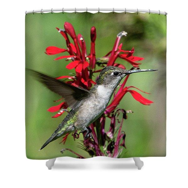 Female Ruby-throated Hummingbird Dsb0325 Shower Curtain