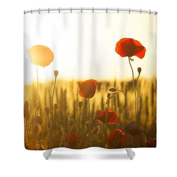 Field Of Poppies At Dawn Shower Curtain