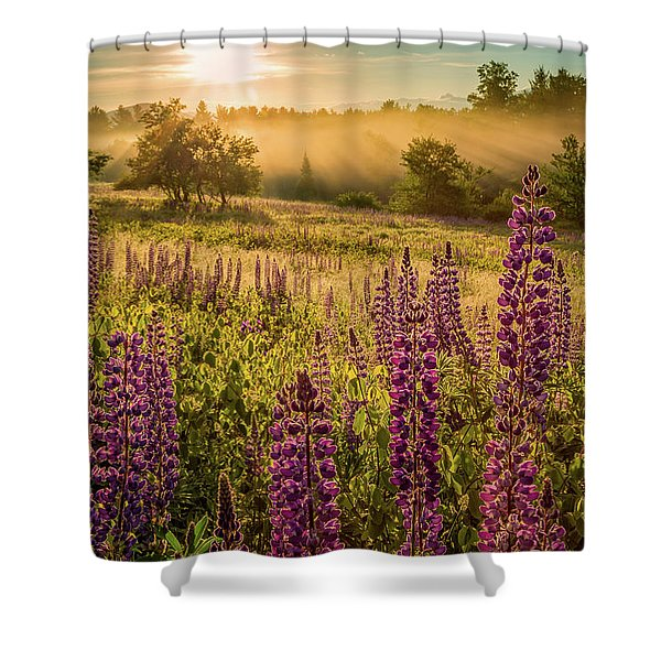 Shower Curtain featuring the photograph Fields Of Lupine by Jeff Sinon