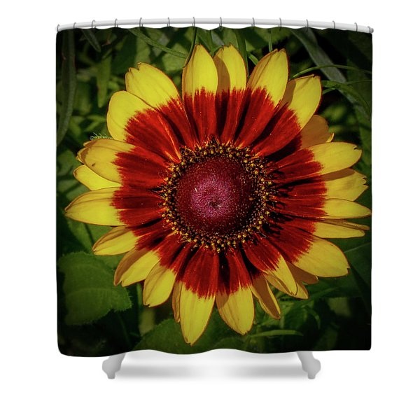 Firewheel Shower Curtain