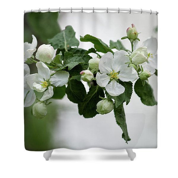 First Apple Flowers 1 Shower Curtain