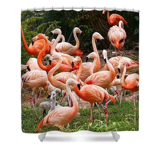 Flamingos Outdoors Shower Curtain