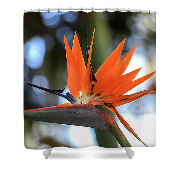 Flight To Paradise Shower Curtain