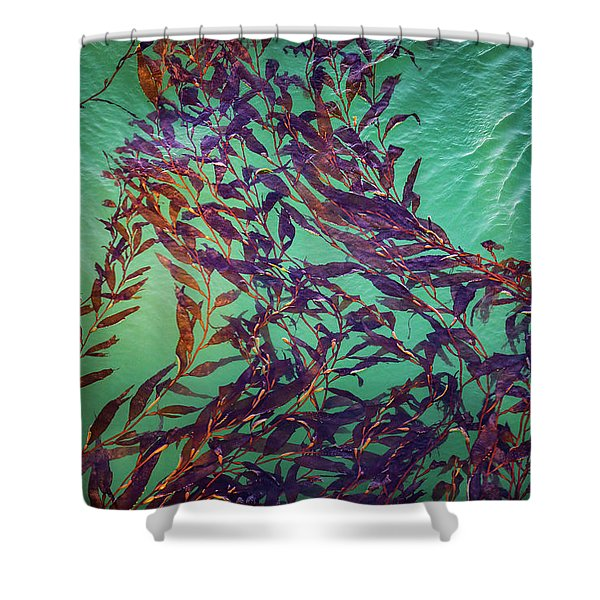 Floatin Kelp I Color Shower Curtain
