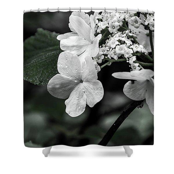 Flower And Rain Drops  8645 Shower Curtain