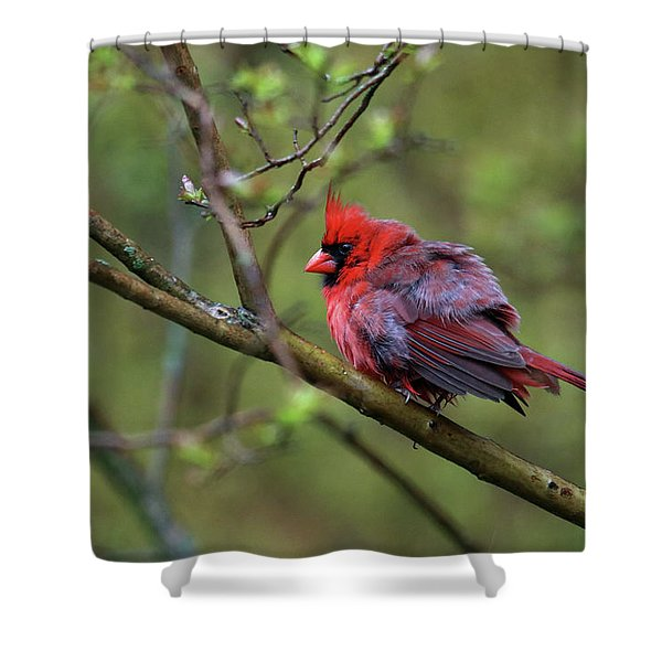 Fluffing Up My Feathers Shower Curtain