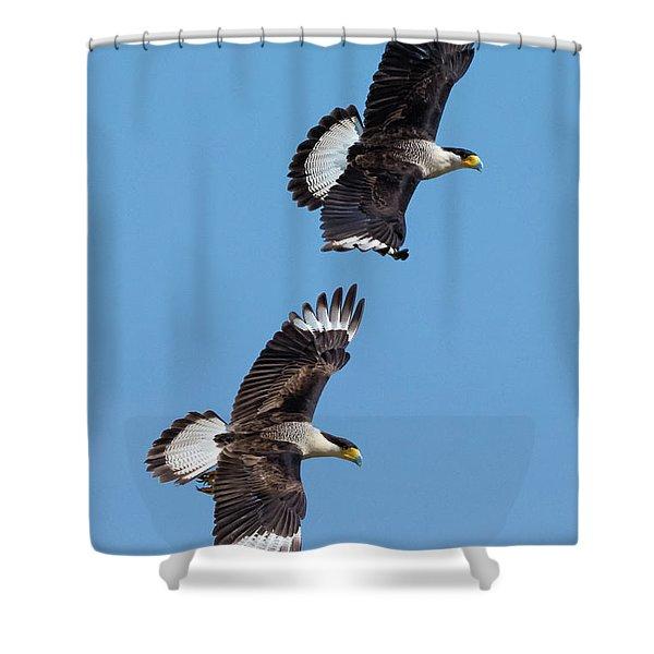 Flying Caracaras Shower Curtain