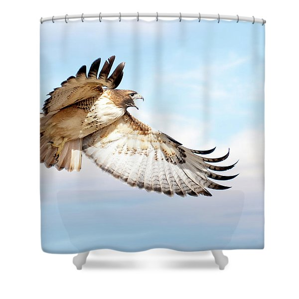 Flying Red-tailed Hawk Shower Curtain