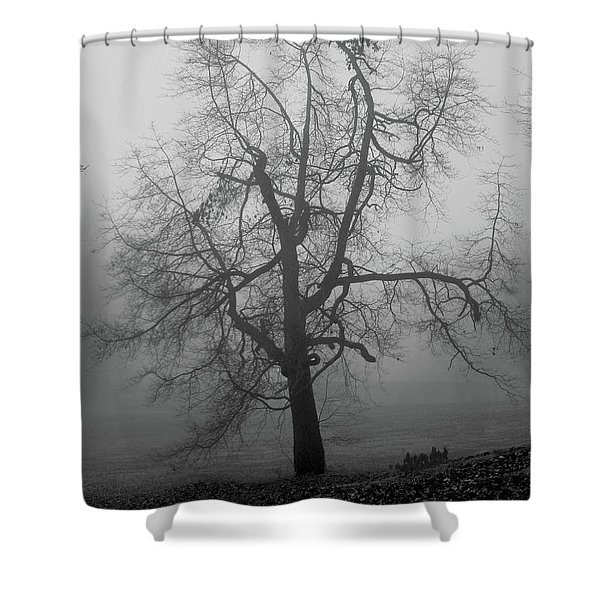 Shower Curtain featuring the photograph Foggy Tree In Black And White by William Selander