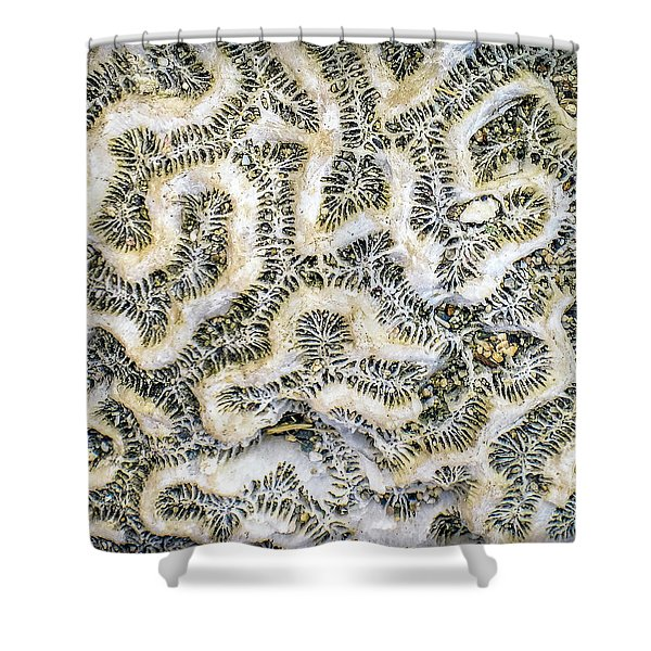 Fossilized Brain Coral Shower Curtain