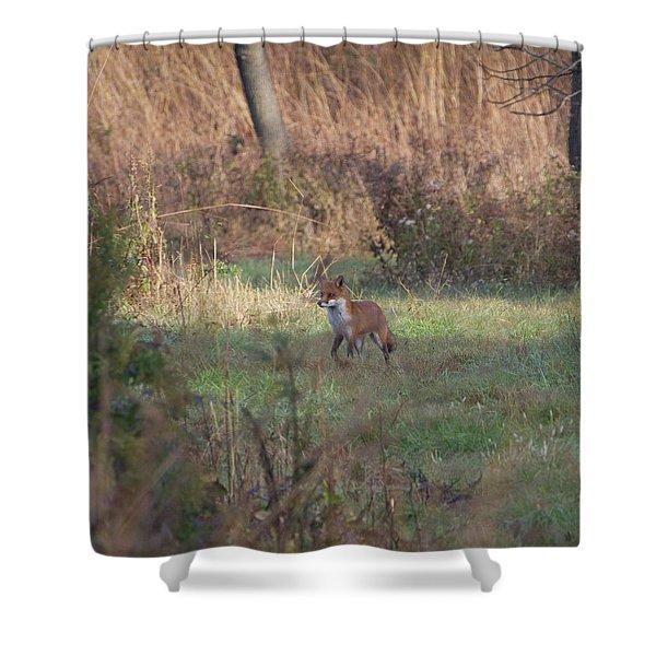 Fox On Prowl Shower Curtain