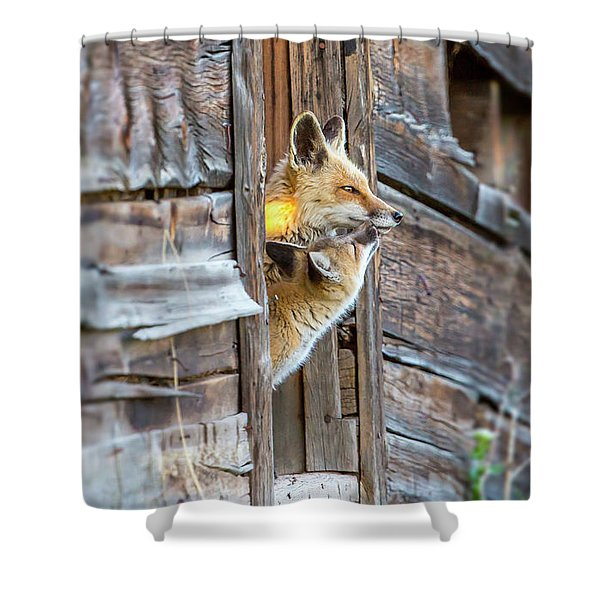 Fox Test  Shower Curtain