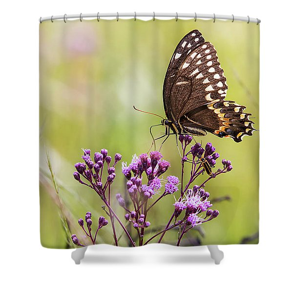 Fragile Wings Shower Curtain