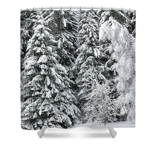 French Alps, Snow Covered Fir Trees In Winter Shower Curtain