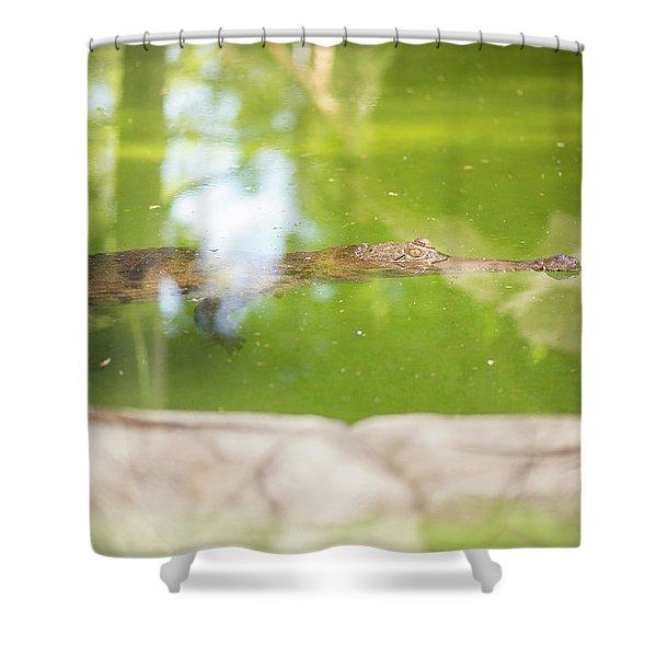 Freshwater Crocodile Shower Curtain