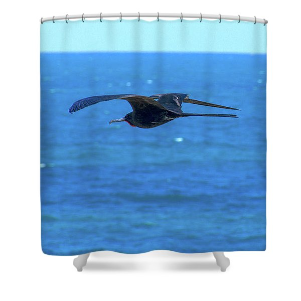 Frigatebird Shower Curtain