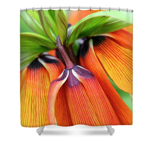 Fritillaria Imperialis Crown Imperial Flowers Shower Curtain