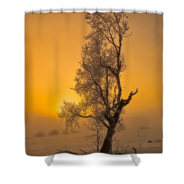 Frosted Tree Shower Curtain