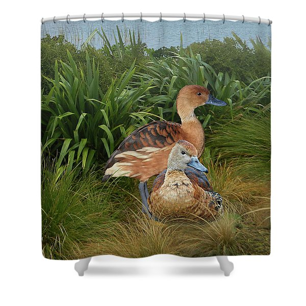 Fulvous Whistling Ducks  Shower Curtain