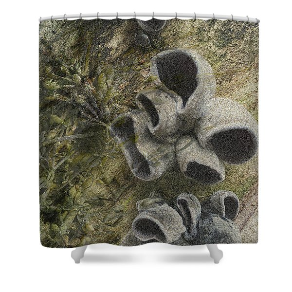 Fungi And Algae Shower Curtain