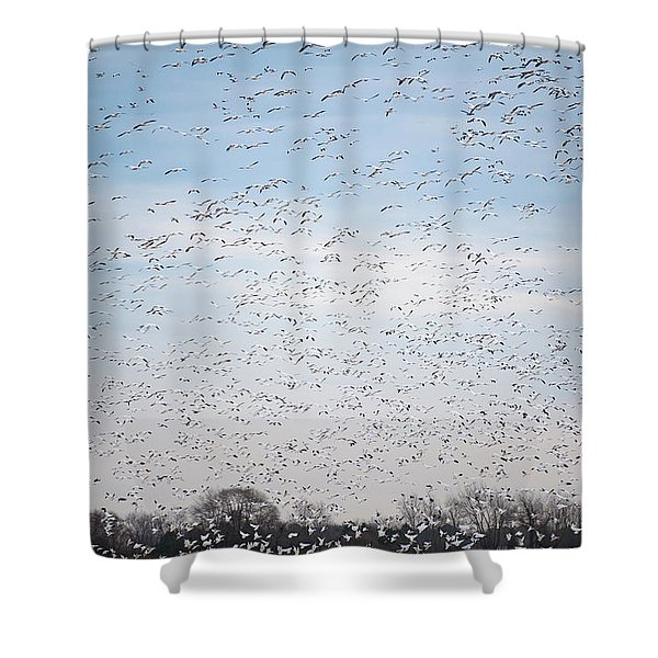 Geese In The Flyway Shower Curtain