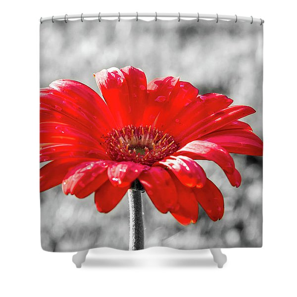 Shower Curtain featuring the photograph Gerbera Daisy Color Splash by Dawn Richards