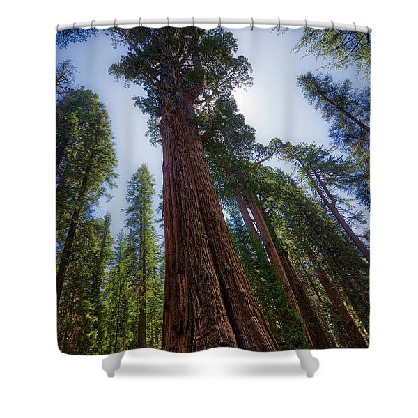Giant Sequoia Tree Shower Curtain