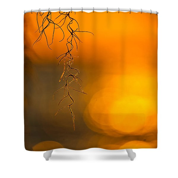 Shower Curtain featuring the photograph Gilded Moss by Tom Gresham