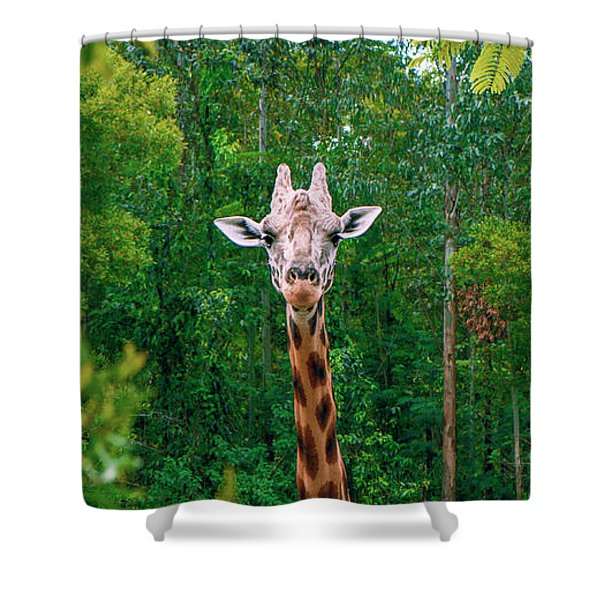 Giraffe Looking For Food During The Daytime. Shower Curtain
