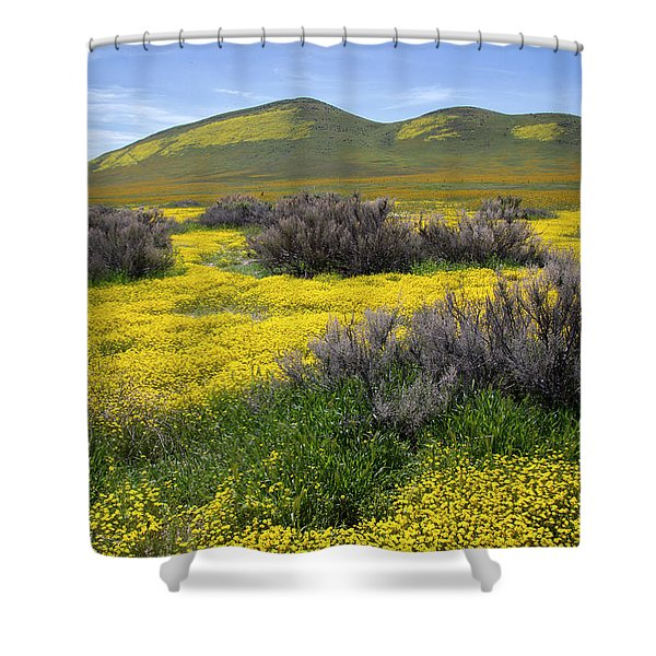 Glorious Color Shower Curtain