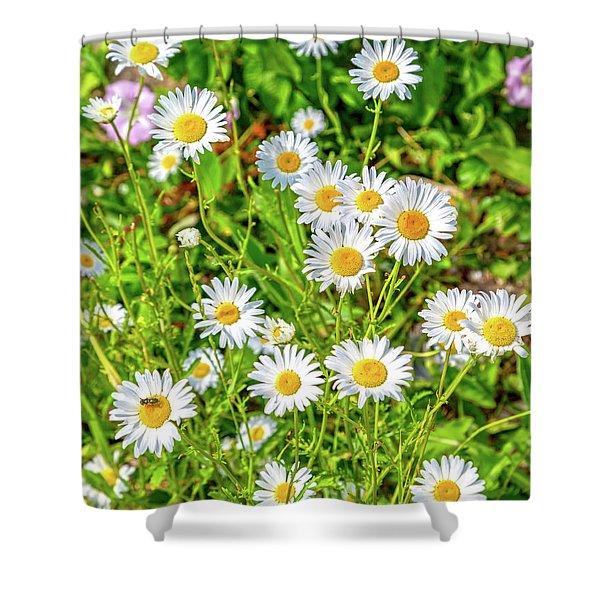 Goat Island Wild Daisies Maine Shower Curtain