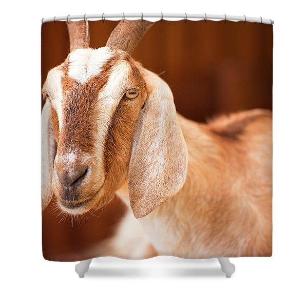 Goat Shower Curtain