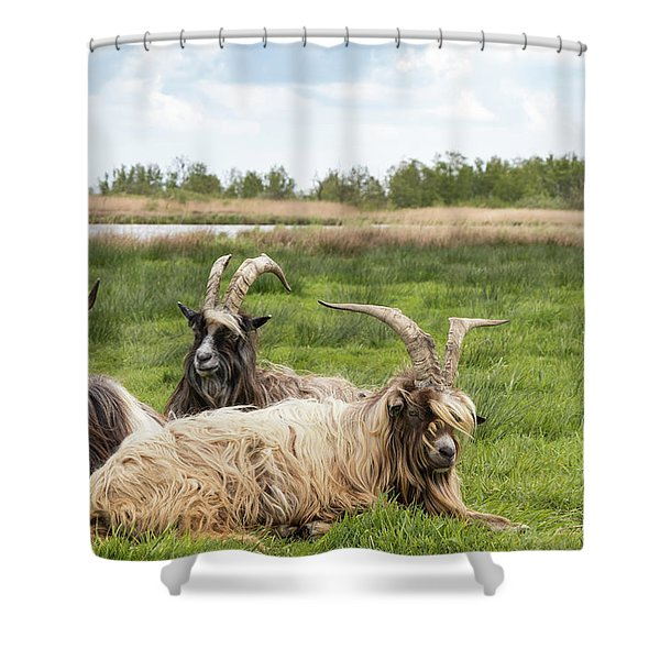 Shower Curtain featuring the photograph Goats  by Anjo Ten Kate