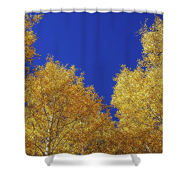 Golden Aspens And Blue Skies Shower Curtain