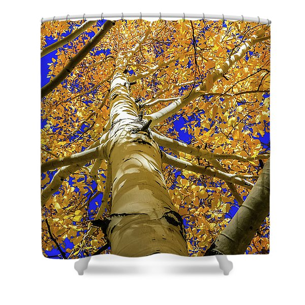 Golden Aspens In Grand Canyon Shower Curtain