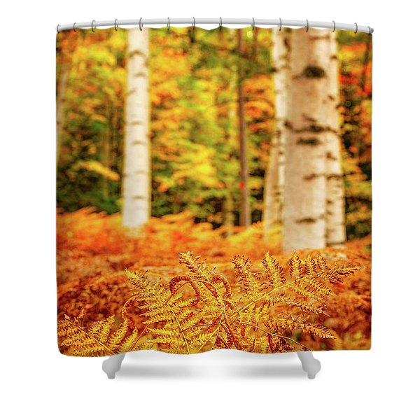 Shower Curtain featuring the photograph Golden Ferns In The Birch Glade by Jeff Sinon