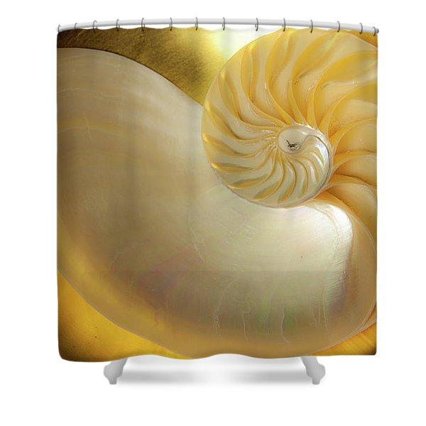 Golden_nautilus_0692 Shower Curtain
