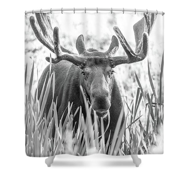 Grand Entry  Shower Curtain