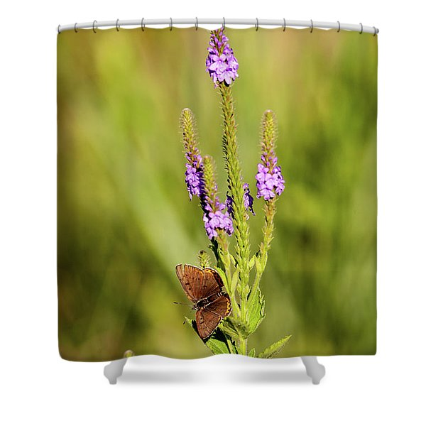 Gray Copper On Blazing Star Shower Curtain