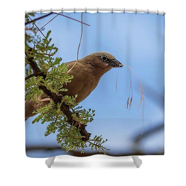 Gray-headed Social Weaver Shower Curtain