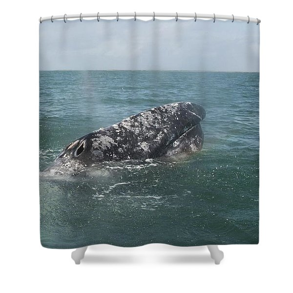 Gray Whale In Bahia Magdalena Shower Curtain