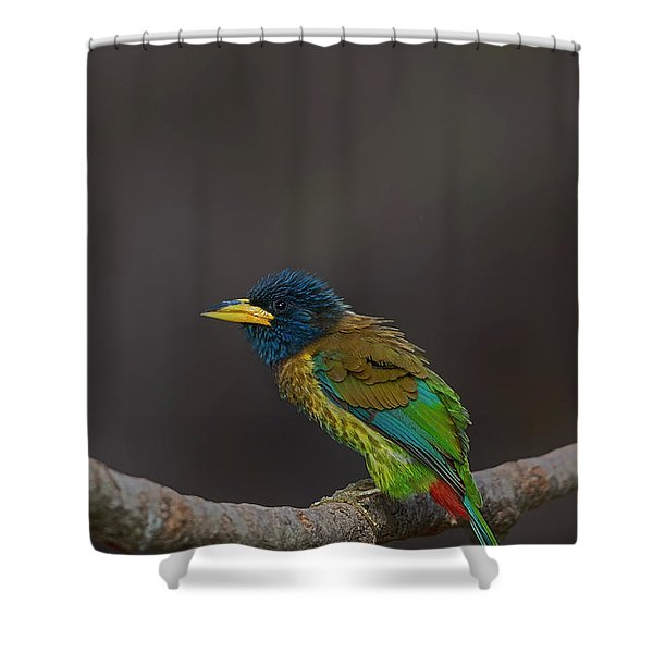 Great Barbet Shower Curtain