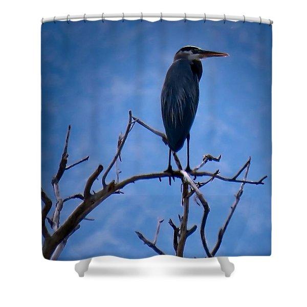 Great Blue Heron 3 Shower Curtain