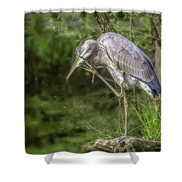 Great Blue Heron Itch Shower Curtain