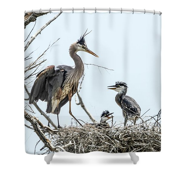 Great Blue Heron Rookery 1 Shower Curtain